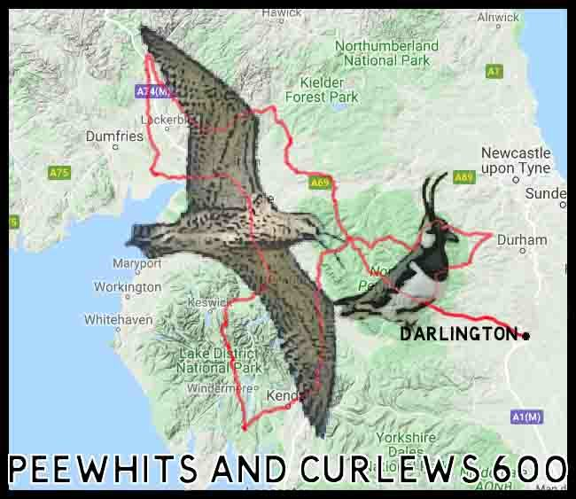 Peewhits and Curlews